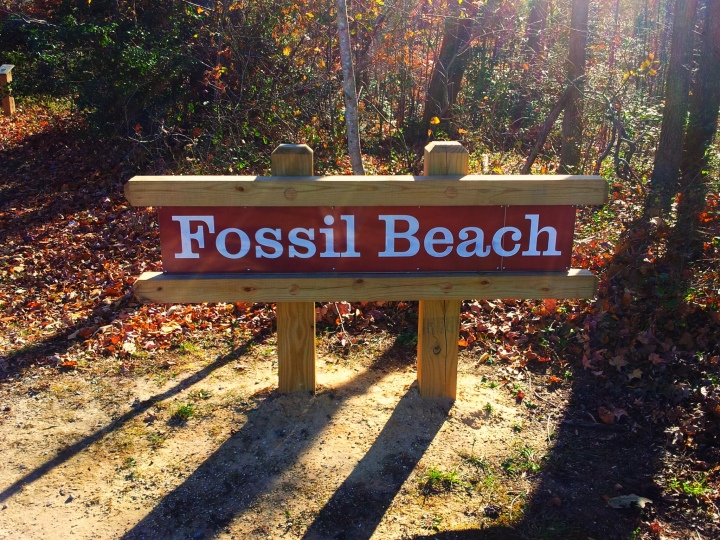 Family Fossil Hunts in Virginia