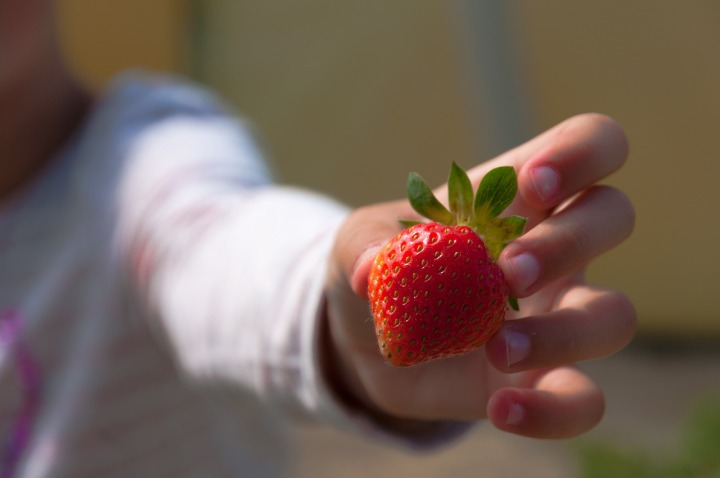Six Virginia Berry Fields for Health-Conscious Pickers